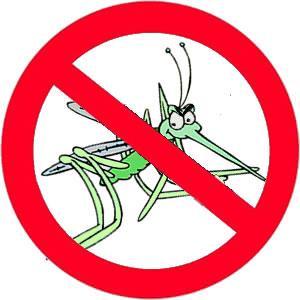 release date: d8a19 dbacc Mückenschutz und Insektenschutz: Die richtige Outdoorbekleidung