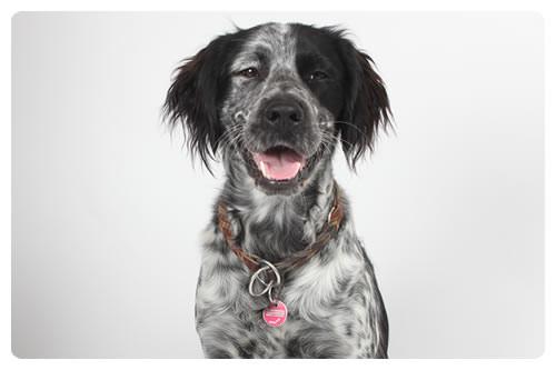 Bürohund Bertl