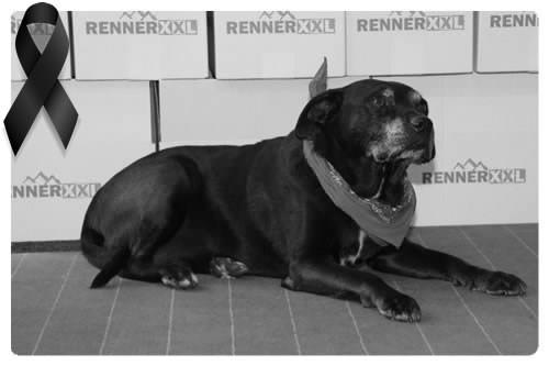 Bürohund Igor