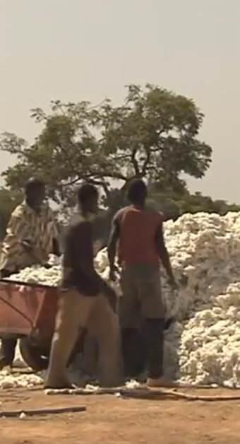 Baumwollproduktion - Zwischenlagerung